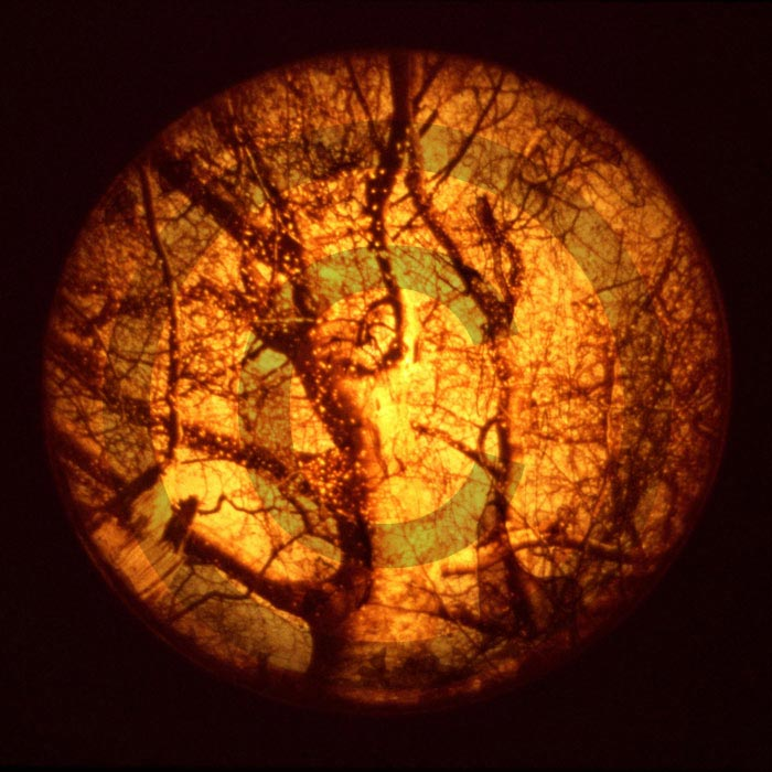 Tree Embryo